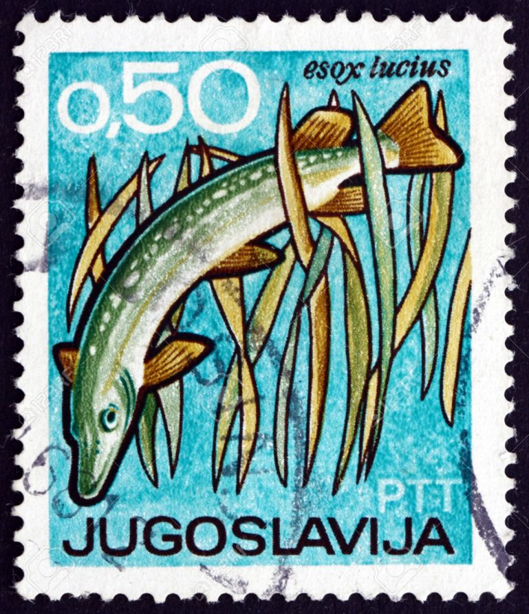 YUGOSLAVIA - CIRCA 1967: a stamp printed in the Yugoslavia shows Pike, Esox Lucius, Fish, International Fishing and Hunting Exposition and Fair, Novi Sad, circa 1967