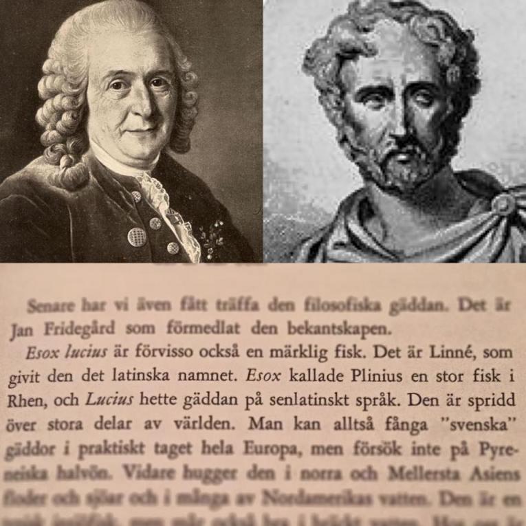 EsoxLucius