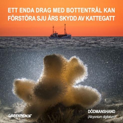 kattegat-front_se.jpg2